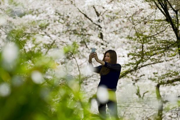 Mulher em parque de Tóquio fotografa cerejeiras em plena floração  (Foto: Thomas Peter/Reuters)