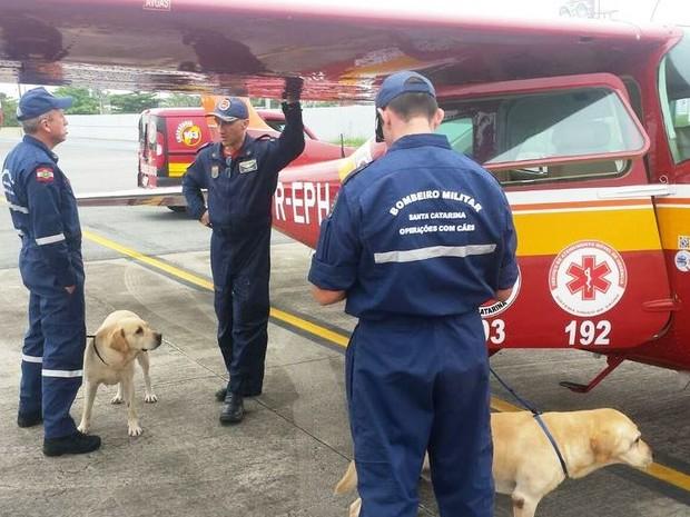 Cães dos bombeiros de SC vão ajudar nas buscas em Mariana (MG) (Foto: Corpo de Bombeiros/Divulgação)