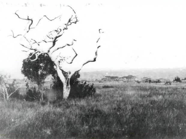 Fotografia de 1926 mostra o cerrado intacto da região de Campo Mourão (Foto: Alexandre Linzmayer/Arquivo)