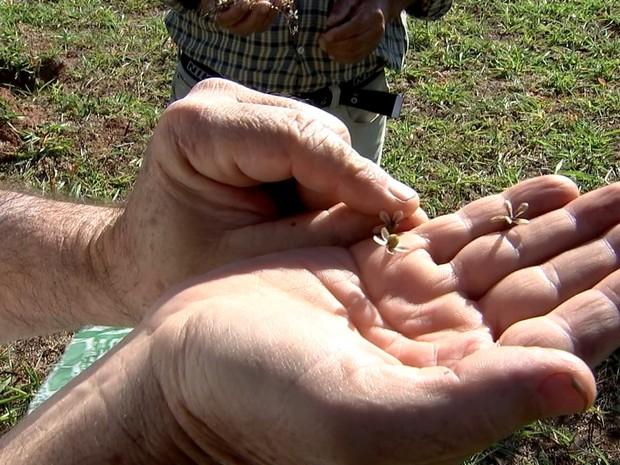 Produtor plantou o pomar sozinho   (Foto: Reprodução/ TV TEM)