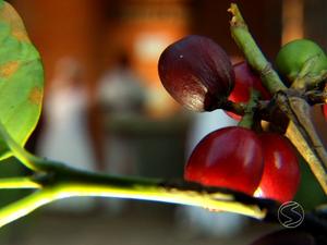 Ciclo do Café e Escravidão são tema de série da TV Rio Sul (Foto: Reprodução/TV Rio Sul)