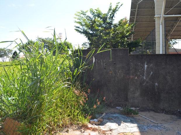 Matagal ao lado de escola em bairro de Campinas, SP (Foto: Lucas Jerônimo/G1)