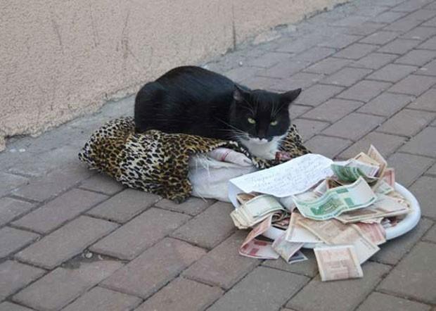 Gato pede esmola em uma cidade da Belarus. Animal permanece no local com um cartaz, que diz: 'preciso de dinheiro para comprar peixe'. Felino não abandona seu lugar e protege o dinheiro apenas com o olhar. A proprietária do gato fica nas proximidades (Foto: Divulgação/English Russia)