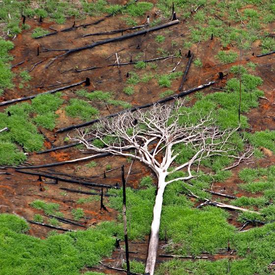 Desmatamento em Rondônia.O estado é um dos que mais perderam área de floresta em 2017 (Foto:  Rodrigo Baleia/Folhapress)