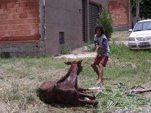 Animal era usado como ferramenta de trabalho  (Foto: Luciana Regina/Divulgação)