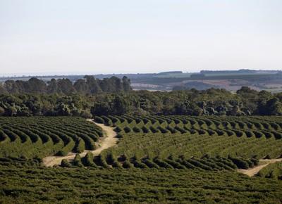 agricultura_cafe_colheita_lavoura (Foto: Davilym Dourado/Ed. Globo)