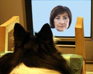 Cães reconhecem rostos familiares de humanos e cachorros, mostra estudo (Foto:  Sanni Somppi)