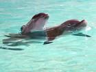 Aquário belga batiza bebê golfinho com nome de atacante da Bélgica