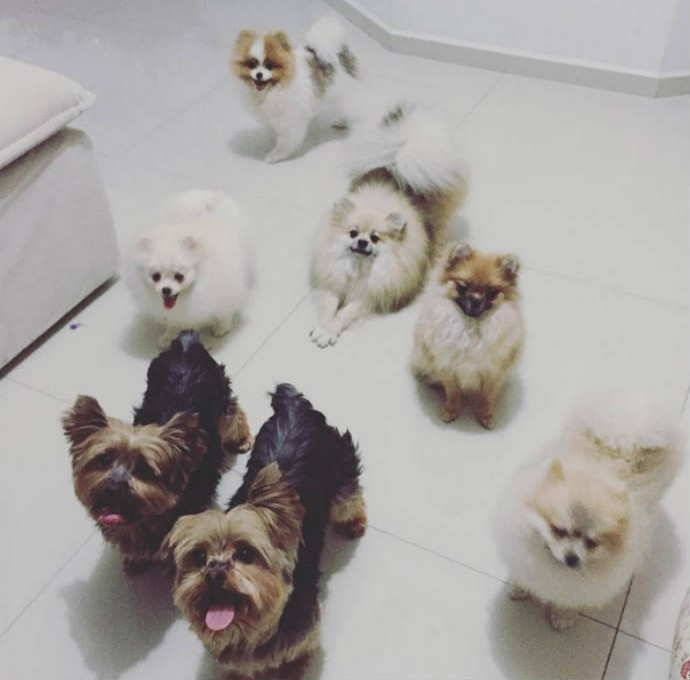 Cachorros de Diego Hypolito: tem até Jade Barbosa e Daniele Hypolito (Foto: Reprodução / Instagram)
