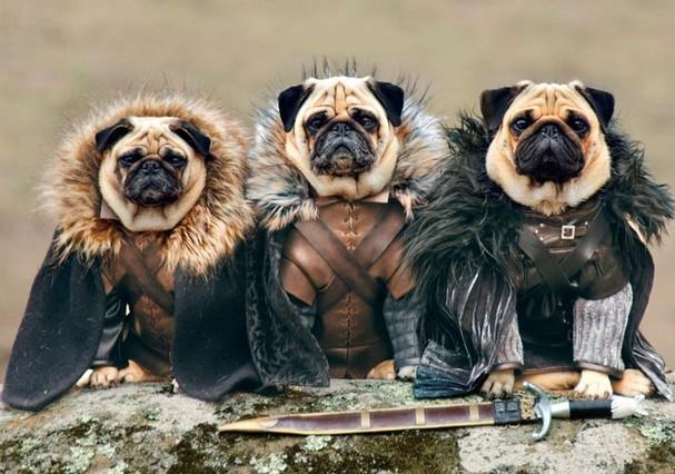 Pugs (Foto: Foto: divulgação)