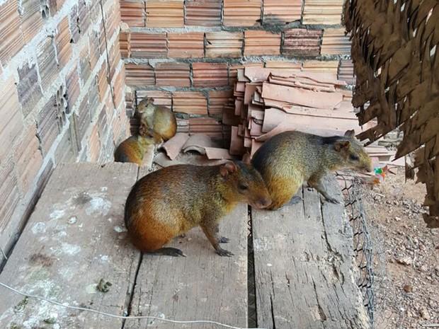 Vários animais silvestres foram apreendidos em operação da Polícia Federal no Maranhão (Foto: Dilvulgação / PF)
