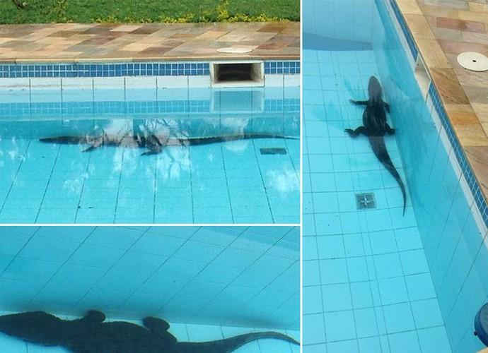 Jacaré é encontrado em piscina no Rio de Janeiro (Foto: Reprodução / Facebook)