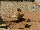 Ninho de coruja faz túmulo de cemitério ser interditado no RS