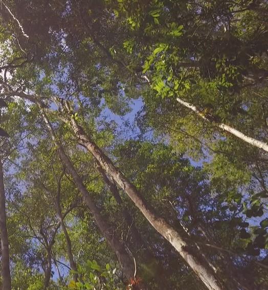 tesouro verde do brasil (rede globo)