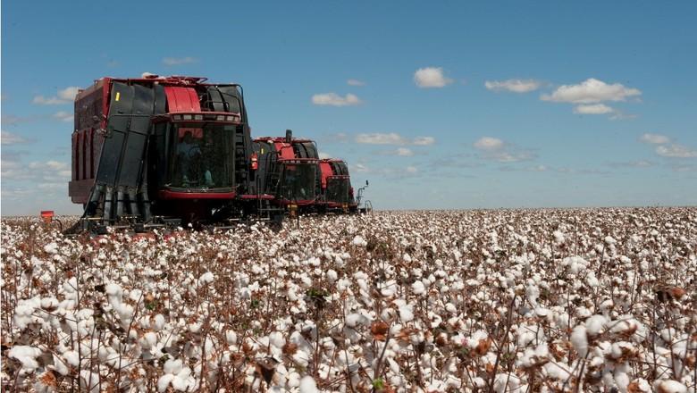 agricultura_algodao_ (Foto: José Medeiros/Ed. Globo)