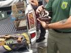 Operação da PF recupera mais de 70 animais e prende 4 pessoas em SP