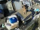 Cães são flagrados em canil municipal de Guareí em más condições; vídeo