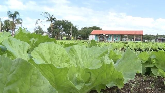 Horta com produtos orgânicos em Ilha Comprida (Foto: Reprodução/TV Tribuna)