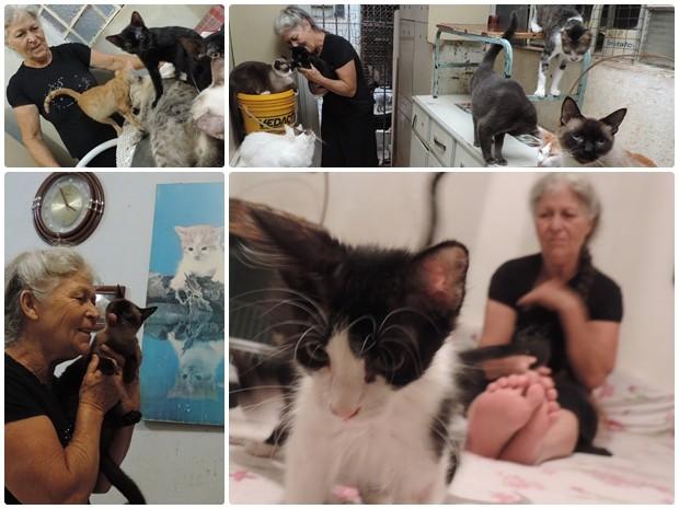 Idosa passa os dias fazendo carinho nos 100 gatos que possui (Foto: Caio Gomes Silveira/ G1)
