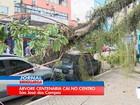 Galho de árvore cai sobre carros e assusta moradores em São José