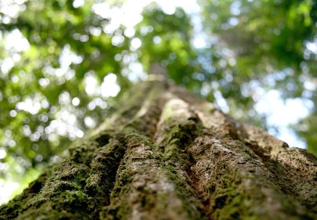 Floresta brasileira ; meio ambiente ; sustentabilidade ; crédito de carbono ; desmatamento ; reflorestamento ;  (Foto: Shutterstock)