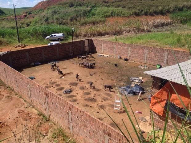 Animais estão subnutridos e muito doentes; pelo menos cinco morreram dentro de terreno, segundo Ademape (Foto: Kety Marinho/TV Globo)