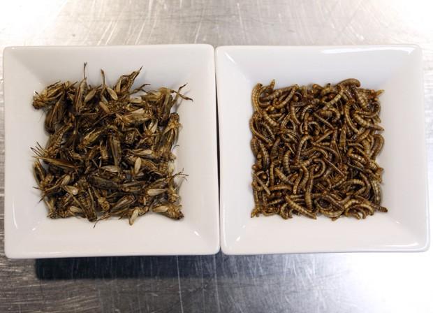 Tigelas com grilos (à esquerda) e minhocas guardam ingredientes incomuns de restaurante em Nice (Foto: Valery Hache/AFP)