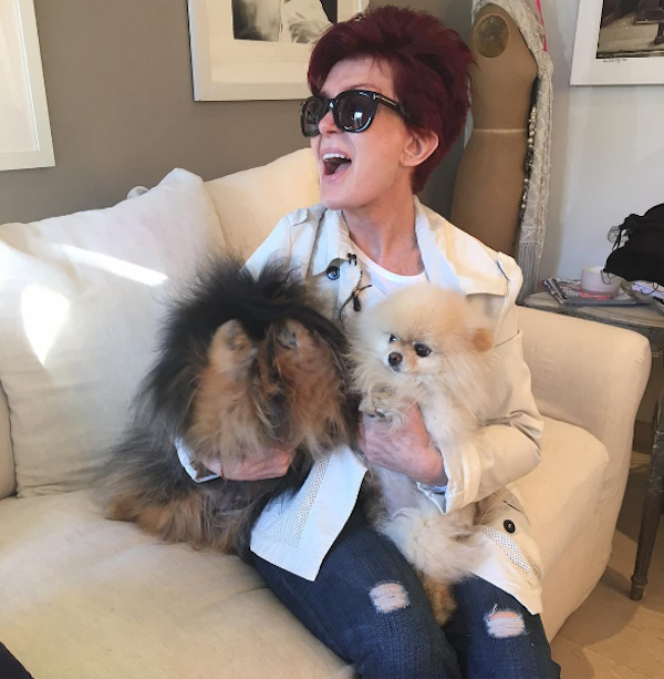 A apresentadora e empresária Sharon Osbourne e são cães (Foto: Instagram)