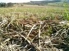 Agricultura de SP pode ter maior prejuízo em 50 anos devido à seca