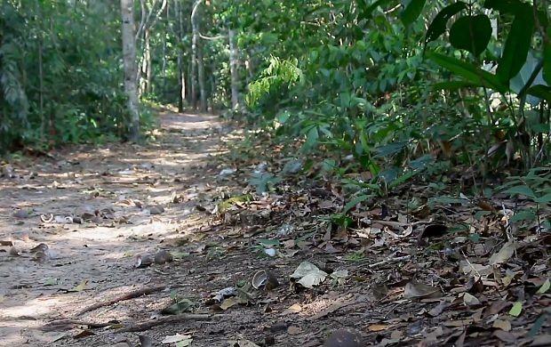 Parque de preservação ambiental é destaque em reportagem (Foto: Rondônia TV)