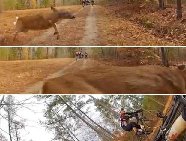 FRAMES video ciclista x veado (Foto: Reprodução)