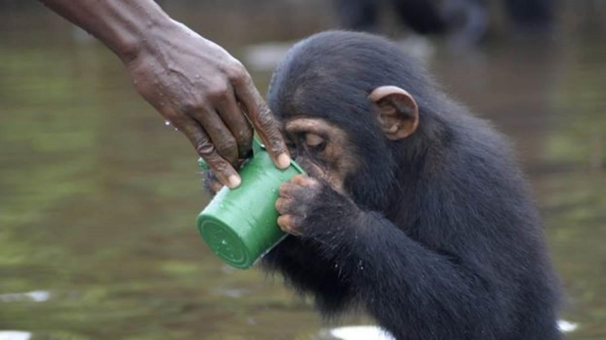 Ex-funcionários do NYBC cuidam dos animais (Foto: Jenny Desmond/Divulgação)