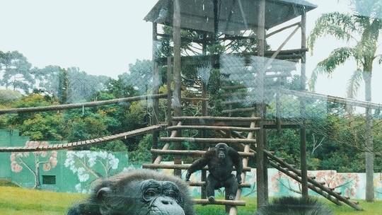 Conheça uma paranaense de 90 anos que tem 23 primatas no quintal de casa