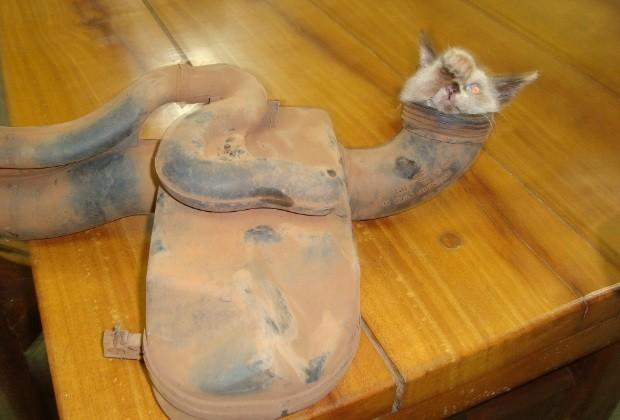 Gato entalado Goiás (Foto: Divulgação/ Corpo de Bombeiros)
