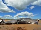 Baleia cachalote morre encalhada em praia da Inglaterra