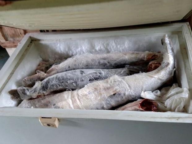 Fiscais da Sema apreenderam 548 kg de pescado irregular em Juara (Foto: Divulgação/Sema-MT)