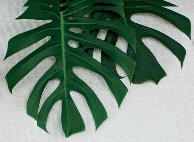 Outro exemplo de espécie tropical, ela apresenta folhas enormes, de coloração verde-escura e que parecem enceradas, de tão brilhantes. Neste caso, uma única folha já dá um lindo efeito no décor (Foto: Marco Antonio/Casa e Jardim)