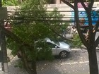 Árvore cai em cima de carro em movimento em rua de Vitória
