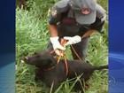 Cachorro é resgatado de barranco depois de ficar 15 dias desaparecido