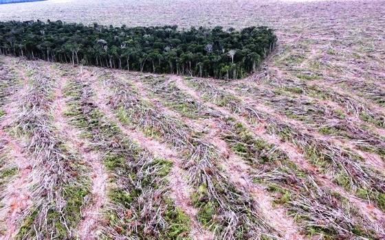 Desmatamento  (Foto: Instituto Centro de Vida)