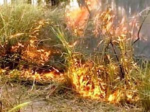 Altas temperaturas aumentam número de incêndios em  Imperatriz (Foto: Reprodução/TV Mirante)