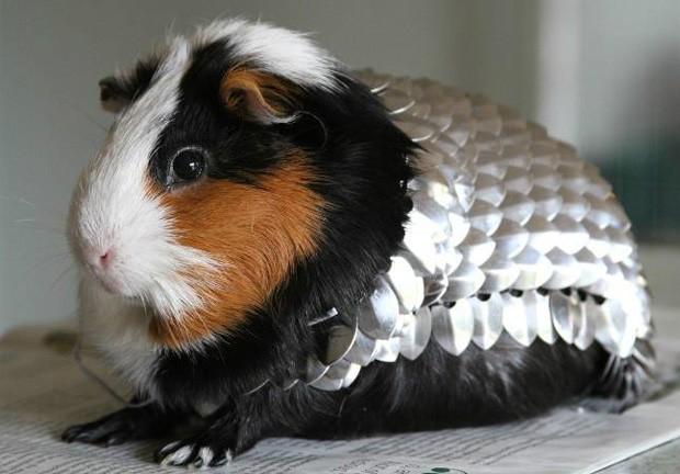 Dono do anúncio afirmou que irá reverter todo o dinheiro para instituição que cuida de animais  (Foto: Reprodução/eBay/mightys0x)