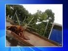 Chuva e vento derrubam árvores e causam estragos na região de Bauru