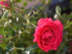 Mais de 200 espécies de flores e plantas ornamentais serão comercializadas durante os 6 dias de feira (Foto: Dennis Weber/G1)