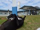 Argentina no Bolshoi, cão que espera dono: veja as mais lidas do G1 SC