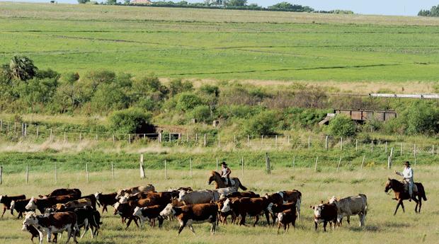 Pampas - Rio Grande do Sul (Foto: Colégio Qi/Reprodução)