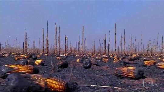 Estiagem provoca queimadas e causa prejuízo a produtores em Mato Grosso
