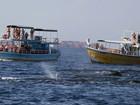 Baleias cachalote atraem turistas na costa do Sri Lanka