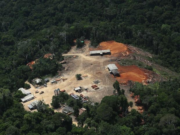 Extração de madeira em área sem licenciamento (Foto: Lunae Parracho/Greenpeace)