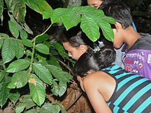 Museu da Amazônia (Foto: Museu da Amazônia/Divulgação)